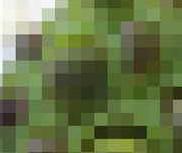 蓮コラの恐怖【画像あり】
