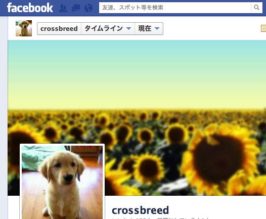 クロスブリード、ついにFacebook界に進出!