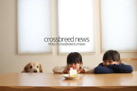 news_logo002